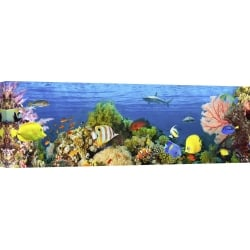 Wall art print and canvas. Pangea Images, Life in the Coral Reef, Maldives
