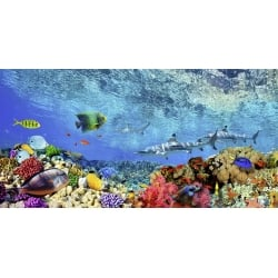 Wall art print and canvas. Pangea Images, Reef Sharks and fish, Indian Sea