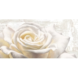 Wall art print and canvas. Jenny Thomlinson, White on White
