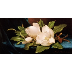 Wall art print and canvas. Martin Johnson Heade, Giant Magnolias on Blue Cloth