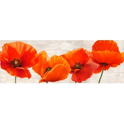 Wall art print and canvas. Jenny Thomlinson, Bright Poppies