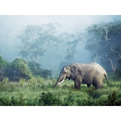 Wall art print and canvas. Krahmer, African elephant, Ngorongoro Crater, Tanzania