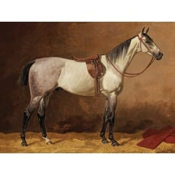 Wall art print and canvas. Emil Volkers, Saddled sport horse