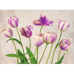 Wall art print and canvas. Jenny Thomlinson, Tulipes