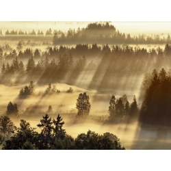 Wall art print and canvas. Krahmer, Fog impression at Sindelbachfilz, Bavaria, Germany