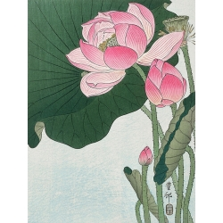 Wall art print on canvas. Koson Ohara,Blooming lotus flowers