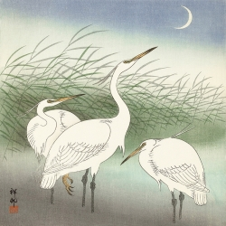 Cuadro japones en canvas. Koson Ohara, Herons in shallow water