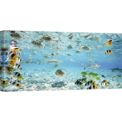 Wall art print and canvas. Pangea Images, Fish and sharks in Bora Bora lagoon