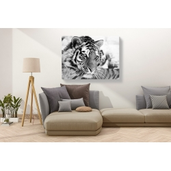 Wall art print and canvas. Ivan Cholov, Tiger