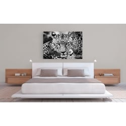 Wall art print and canvas. Dimitri Ersler, Young Leopard
