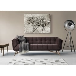 Wall art print and canvas. Leopard hunting